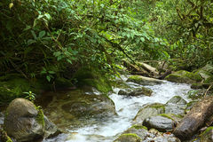 Small Brook with Plants. Small brook surrounded by rocks and lush vegetation in cloud forest in Ecuador close to the small town of Rio Verde Royalty Free Stock Images