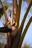 Small Brown Bird in Palm Plant Royalty Free Stock Photos