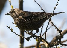 A small brown bird sits on tree Stock Photography