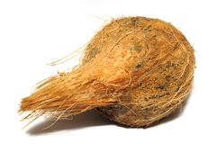A small brown coconut against a white backdrop Royalty Free Stock Photography