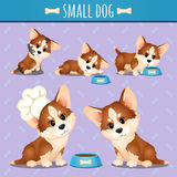 Small brown dog with food in different poses Stock Photos