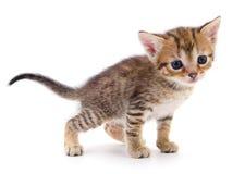Kitten on white background royalty free stock photos