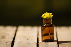 Small brown medicine bottle for magicians remedy, yellow flowers placed inside, sitting on wooden surface.  Royalty Free Stock Image