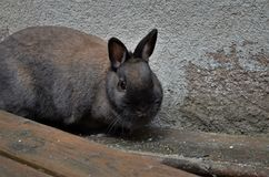 Cute brown rabbit sitting on wood stock photo