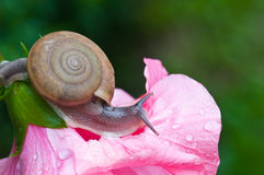 Small brown snail Stock Photo
