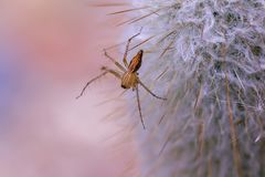 A small brown spider on the cactus. stock photo