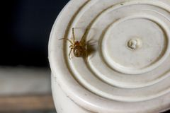 Brown spider is on a white object. stock photo
