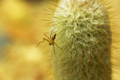 A small brown spider on the cactus. stock photos