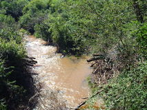 Small brown stream with brown water Royalty Free Stock Photography