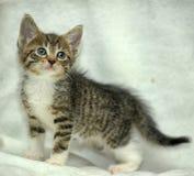 Small brown tabby kitten Stock Photo