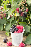 Small bucket of blackberry and raspberry Royalty Free Stock Photography