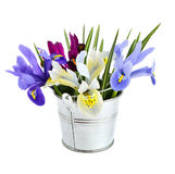 Small bucket with iris. Stock Photos