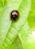 Small bug Stock Photography