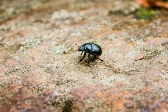 A small bug on the dirt road. In the forest royalty free stock photo