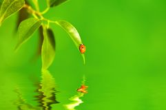 The small bug on a leaf of a plant. Stock Image