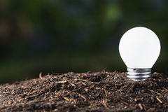 Small Bulb Growing Stock Photography