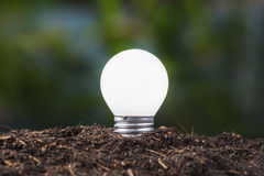 Small Bulb Growing Royalty Free Stock Photo