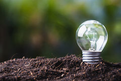 Small Bulb Growing Royalty Free Stock Images