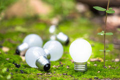 Small Bulb in Nature Royalty Free Stock Images