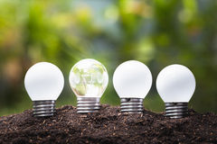 Small Bulbs Growing Royalty Free Stock Photos
