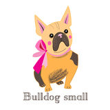 Small bulldog Stock Photography