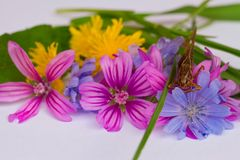 Small bunch of bright meadow flowers. A small bunch of bright meadow flowers Stock Images