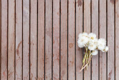 Small bunch of dandelions on a wooden table. Royalty Free Stock Images