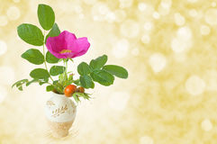 A small bunch of dog-rose in a vase Stock Images