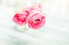 Small bunch of flowers ranunculus Royalty Free Stock Images