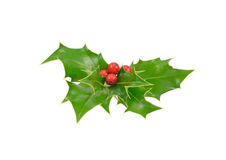 Fresh picked holly isolated Stock Photography