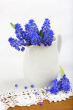 Small bunch of grape hyacinths on the white lace Royalty Free Stock Image