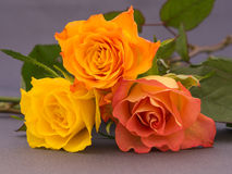 Small bunch of orange and yellow colored roses Stock Images