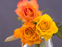 Small bunch of orange and yellow colored roses Stock Photography