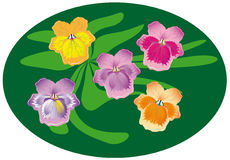 A small bunch of pansies Stock Image