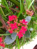 Small bunch of red flowers Royalty Free Stock Photography