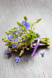 Small bunch of veronica germander flowers Stock Images