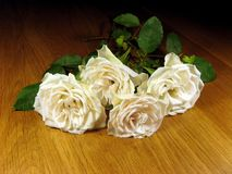 Small bunch of white roses. Landscape photo of a small bunch of white roses royalty free stock images