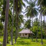 Small bungalow at the palm trees plantation Stock Photos