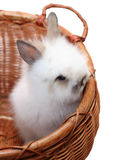 Small bunny in a basket Stock Image