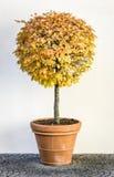 Small bush. At a backyard in italy Royalty Free Stock Images
