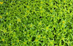Small bush leaves Royalty Free Stock Image