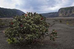 Crater bush Stock Images