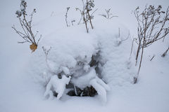 Small bushes are covered fully. With snow Royalty Free Stock Photo
