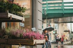 A small business for selling flowers in a German city. Beautiful pink and purple flowers knospenheide and calluna stock photography