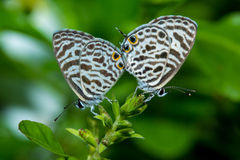 Small butterflies Royalty Free Stock Photos