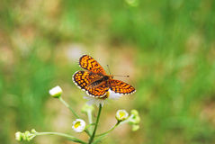 A small butterfly. In the beautiful nature Royalty Free Stock Photos