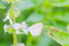 Small butterfly Royalty Free Stock Photos