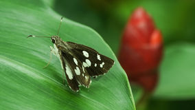 Small butterfly Stock Image