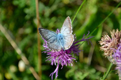 Small butterfly on flower Stock Photography