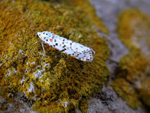 Small butterfly on granite. Small butterfly resting on molds granite Royalty Free Stock Image